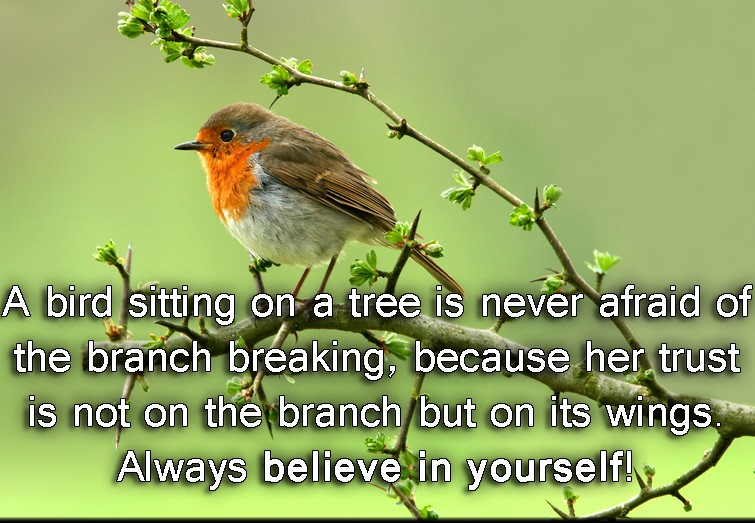 EmilysQuotes.Com-bird-fear-trust-wings-branch-believe-in-yourself-inspirational-encouraging-unknown