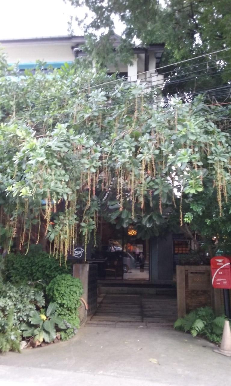 Chiang Mai 3